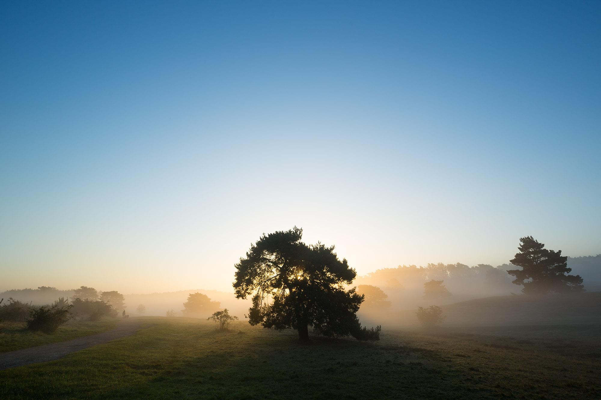 SPUISERS brunssummerheide landschap fotografie