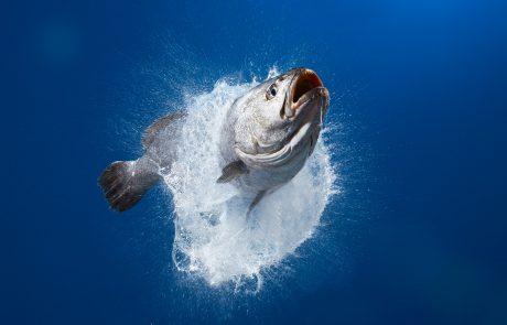 SPUISERS vis culinair water miops