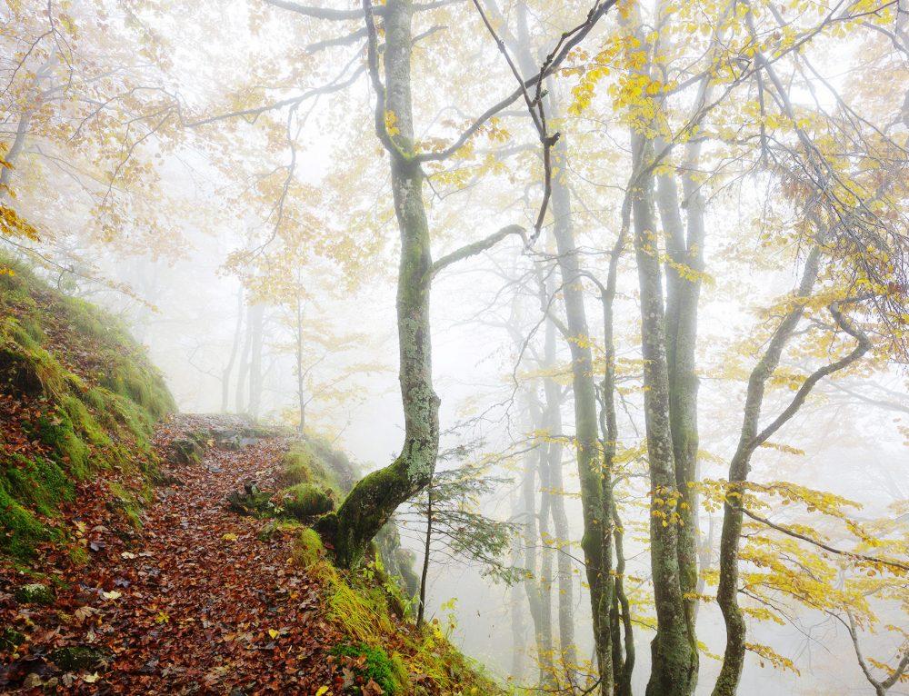 Le Rouge Gazon in de mist